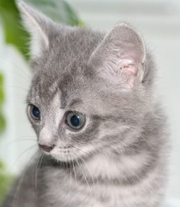 Accountant Cat 3