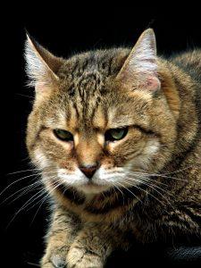 Accountant Cat 5