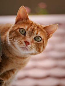 Accountant Cat 2