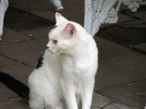 Accountant Cat 4