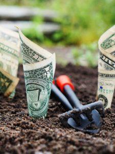 dollar bills planted in soil