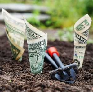 growing money from dirt